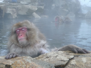 1280px-Onsen_Monkey