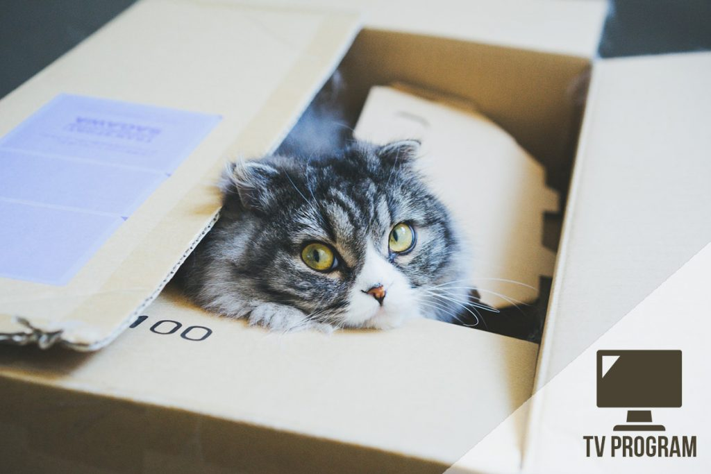 cat323r